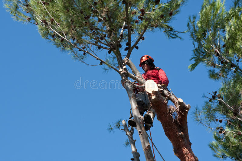 Pin de coupe de trimmer d'arbre image stock