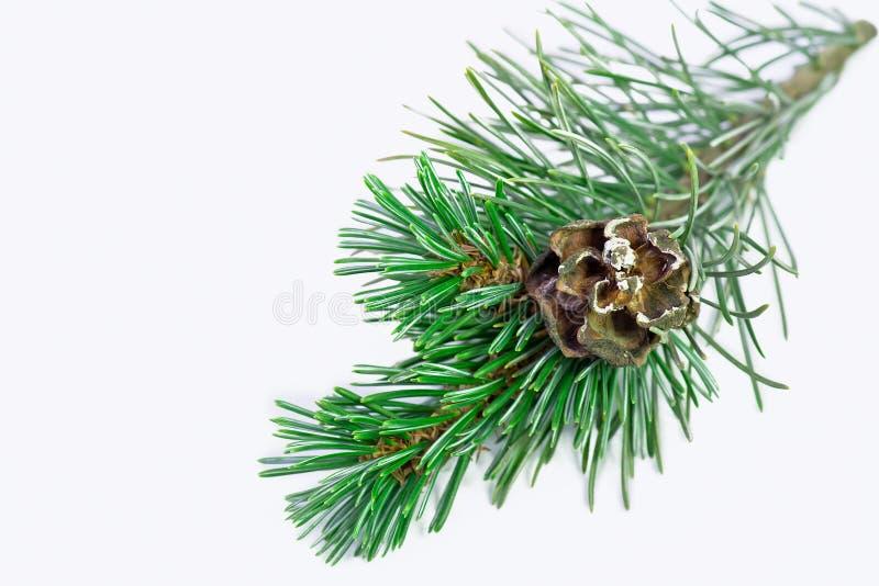 Download Pin de Noël photo stock. Image du festive, conception - 45371170