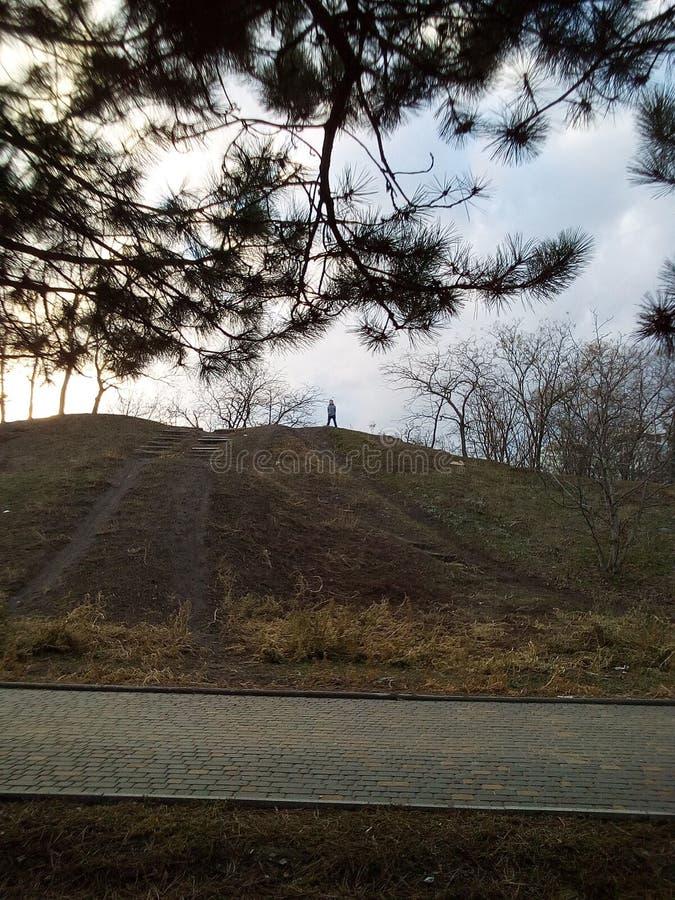 Pin devant la colline photo libre de droits