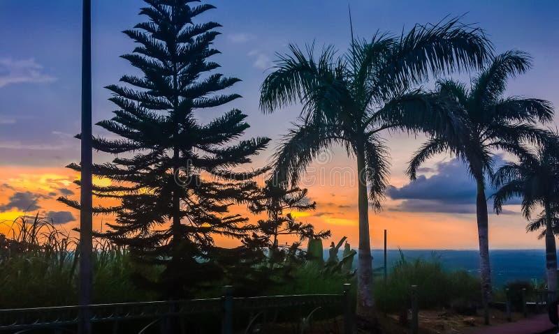 Pin et l'arbre de noix de coco trois fruit-découvrant non au-dessus d'un beau coucher du soleil images stock