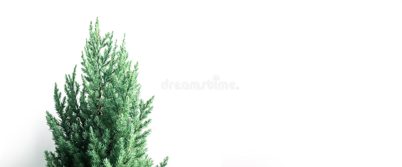 Pin mignon sur le fond blanc de taille de bannière Joyeux Noël photo libre de droits
