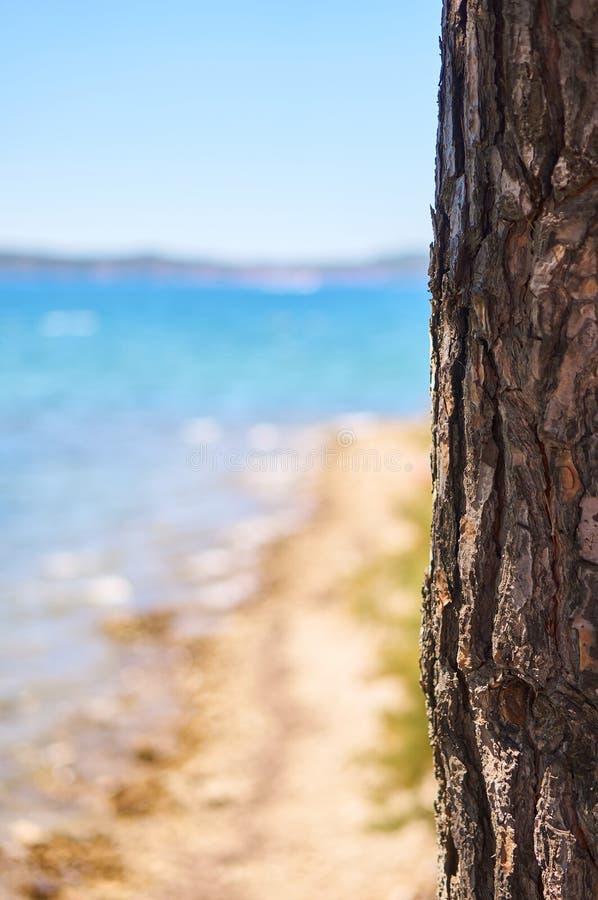 Download Pin près de plage image stock. Image du fond, tourisme - 76080985