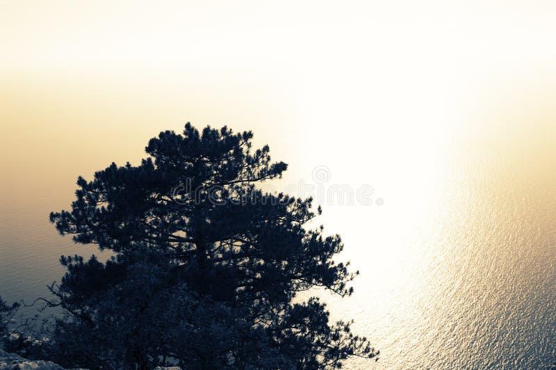 Pin simple contre la mer miroitée photos libres de droits
