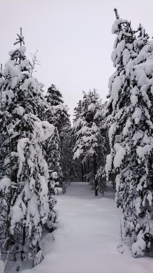 Pin Snow-covered photos libres de droits