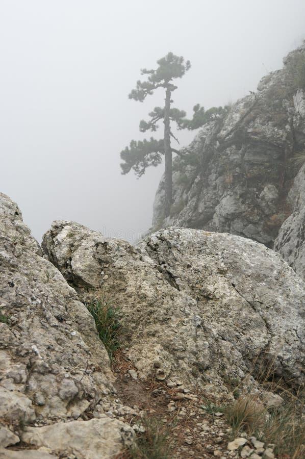 Pin sur la falaise en brouillard dense photo libre de droits