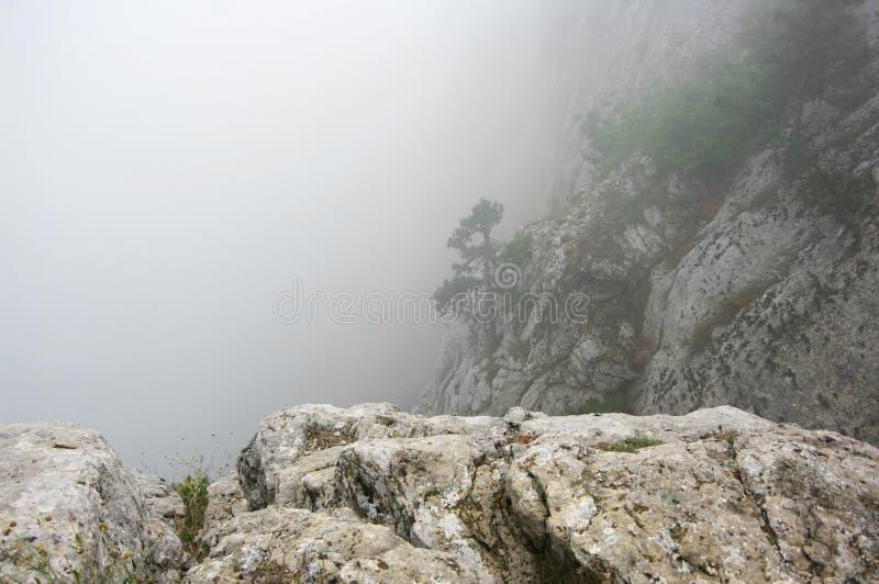 Pin sur la falaise en brouillard dense images stock