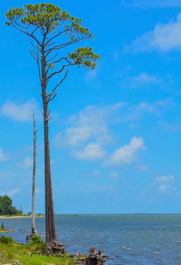 Pin sur St George Sound près de Carrabelle, Franklin County, la Floride image stock