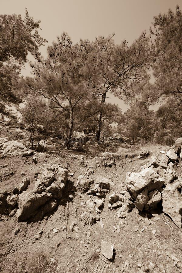 Pin sur un flanc de coteau en pierre teinté images stock