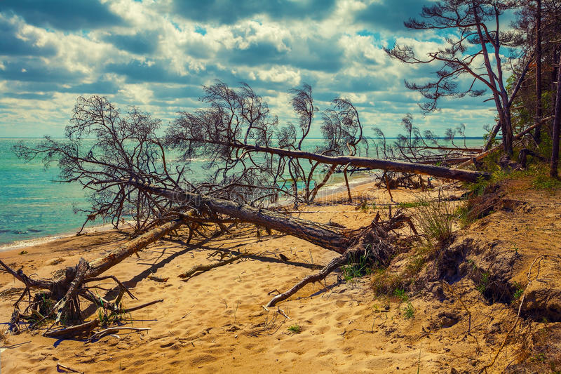 Pin tombé sur la plage photos stock