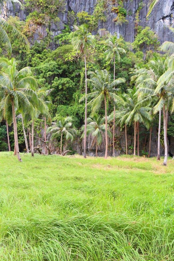Pinagbuyutan海岛 库存照片