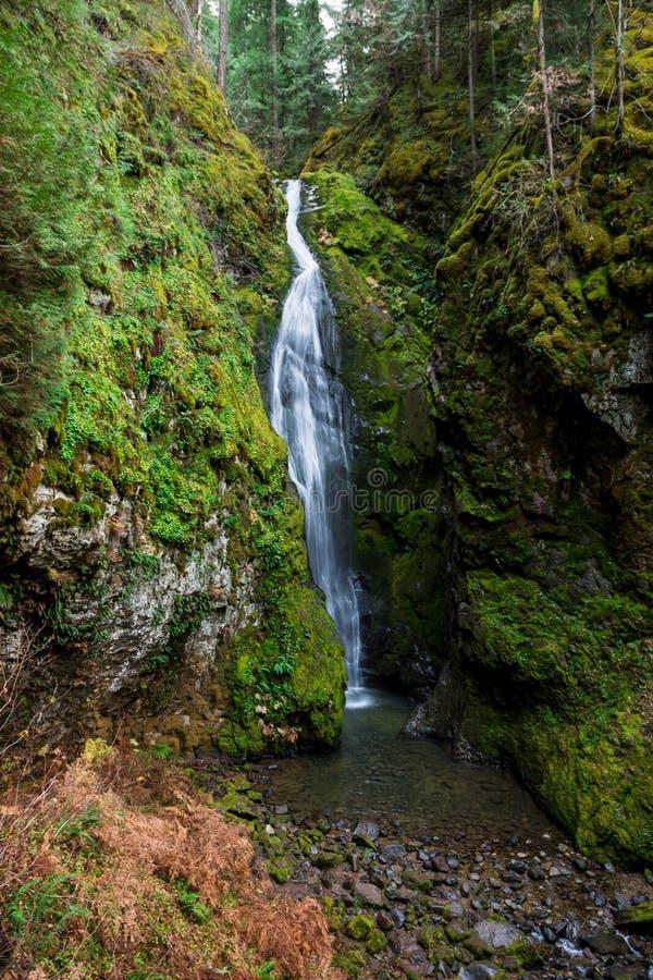 Pinard cae sobre el bosque nacional Umpqua en Oregón imagen de archivo