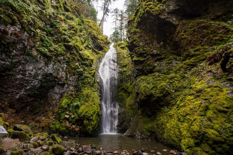 Pinard Falls Umpqua National Forest in Oregon royalty free stock photography