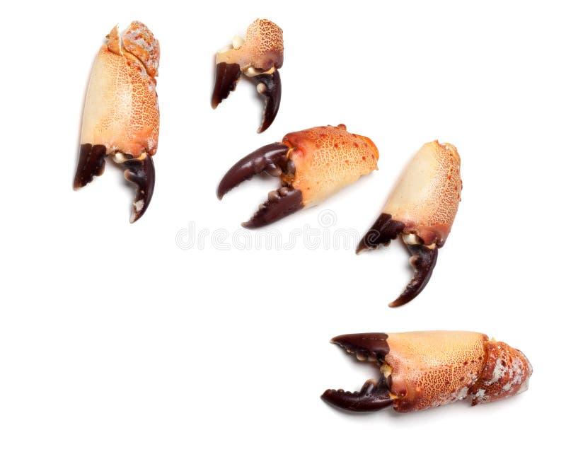 Pince cuite de crabe photo stock