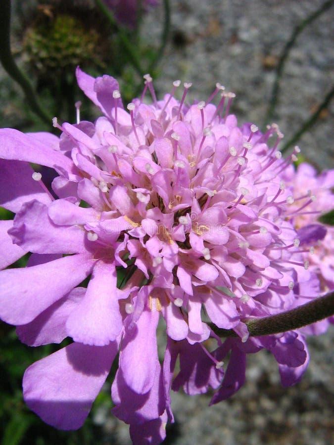 pincushion photos stock