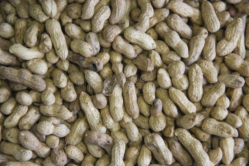 Pinda in een shell textuur voedselachtergrond van pinda's stock fotografie