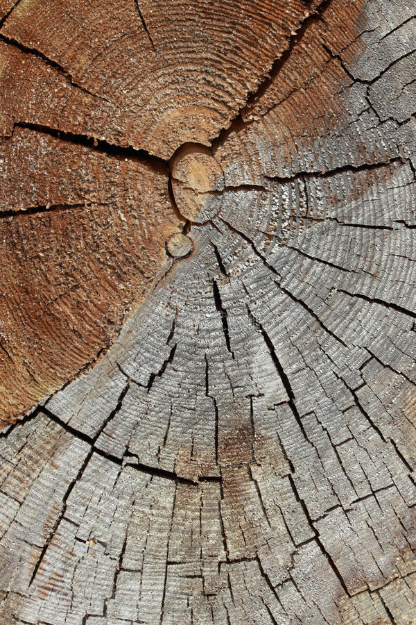 Download Pine stock image. Image of nature, timber, texture, background - 25888963
