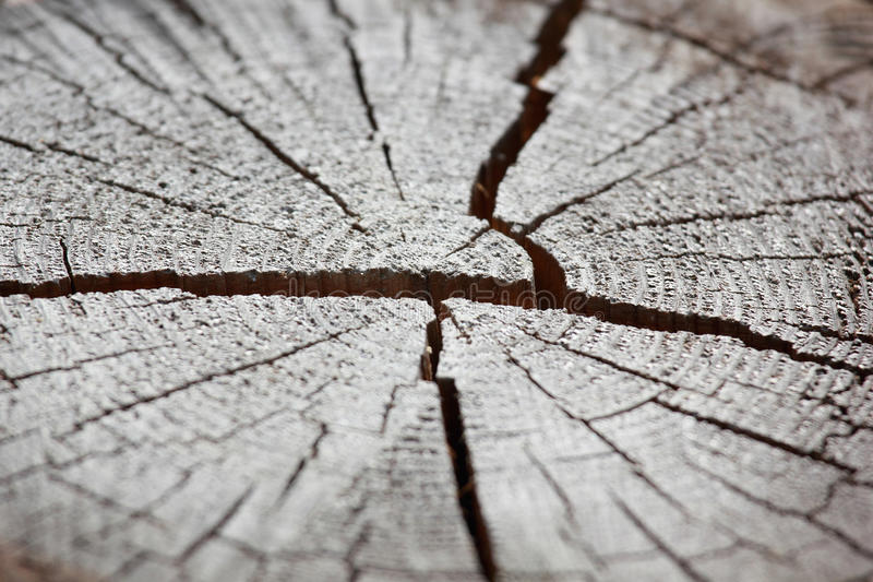 Download Pine stock image. Image of pine, macro, scratch, nature - 25890605