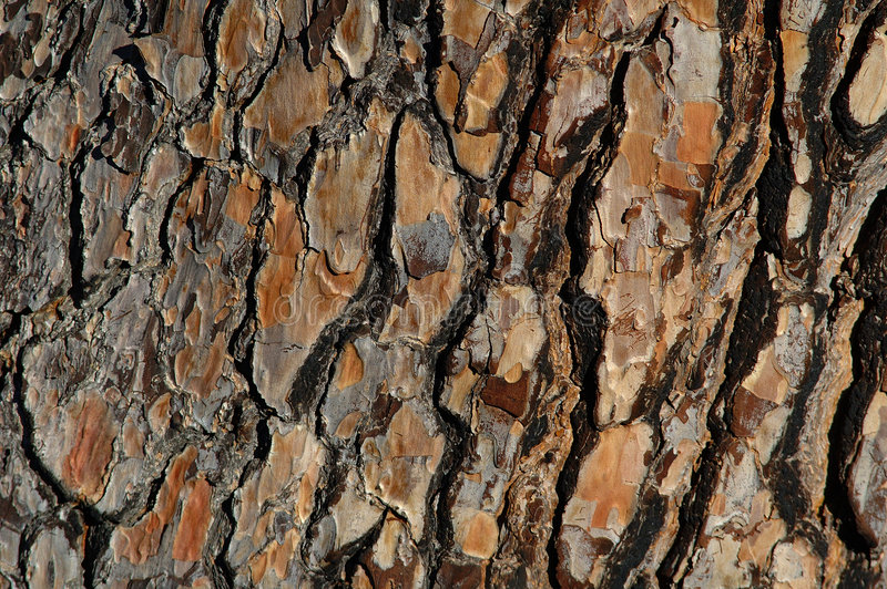 Download Pine bark stock image. Image of forest, leaf, tree, evergreen - 507505