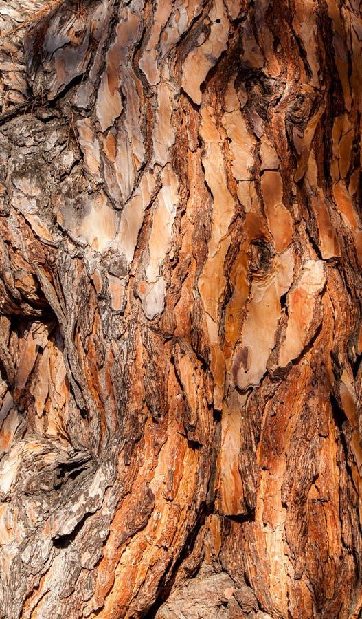 Download Pine bark background stock image. Image of plant, background - 33227311