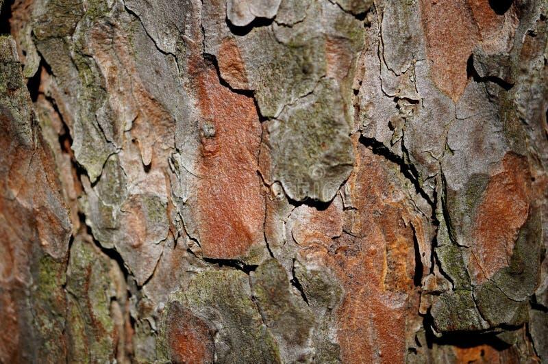 Pine bark royalty free stock photography