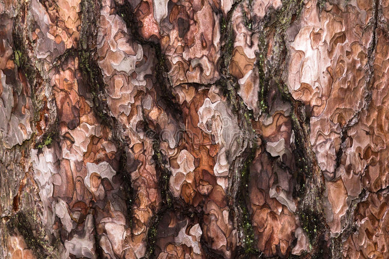 Pine bark. Close up of pine bark stock image