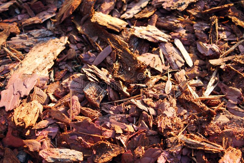 Pine bark close-up abstraction. Background sawdust royalty free stock image
