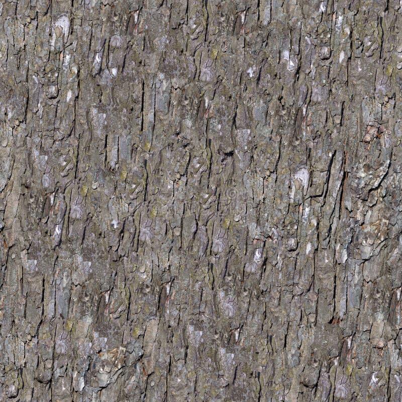 Free Pine Bark. Seamless Tileable Texture. Stock Photos - 35361753