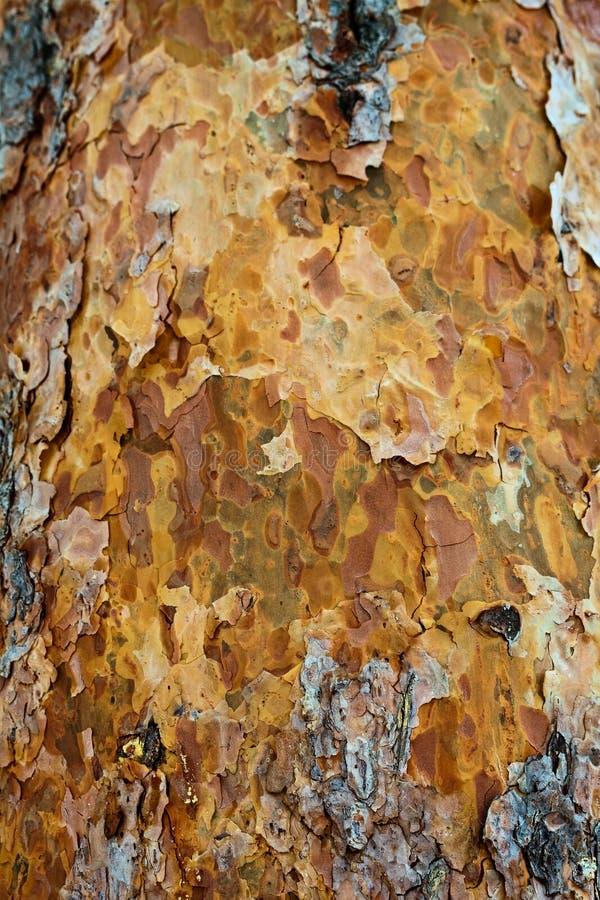 Pine bark texture.