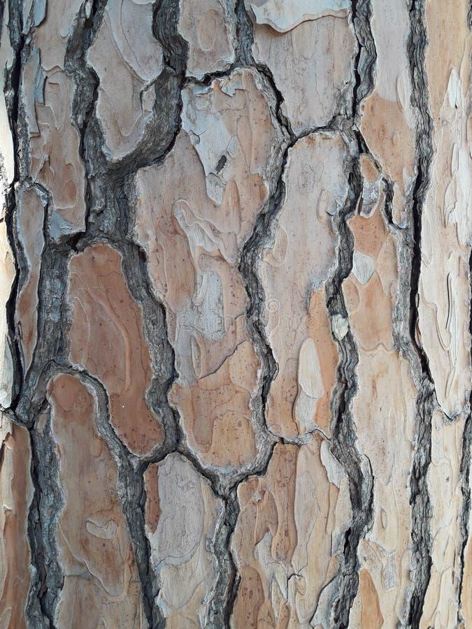 Pine bark texture stock photos