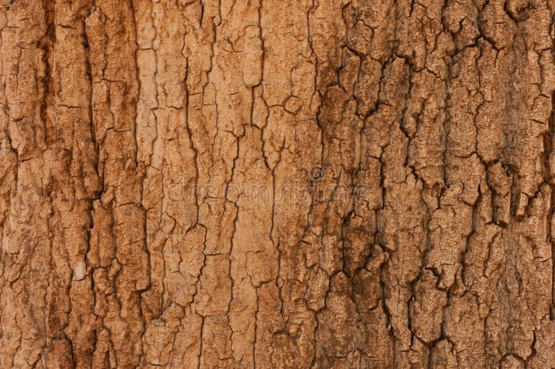 Pine bark texture background. Tree close up. dry and rough texture Nature backdrop. royalty free stock images