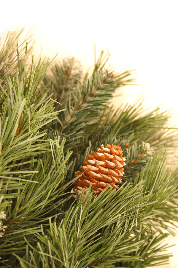 Download Pine boughs stock photo. Image of detailed, white, needle - 1460748