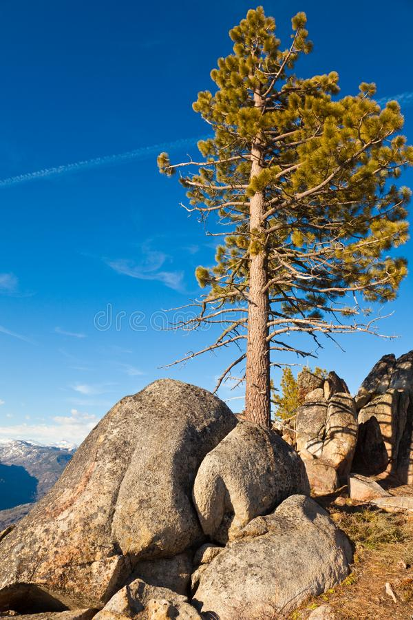 Pine and Boulders