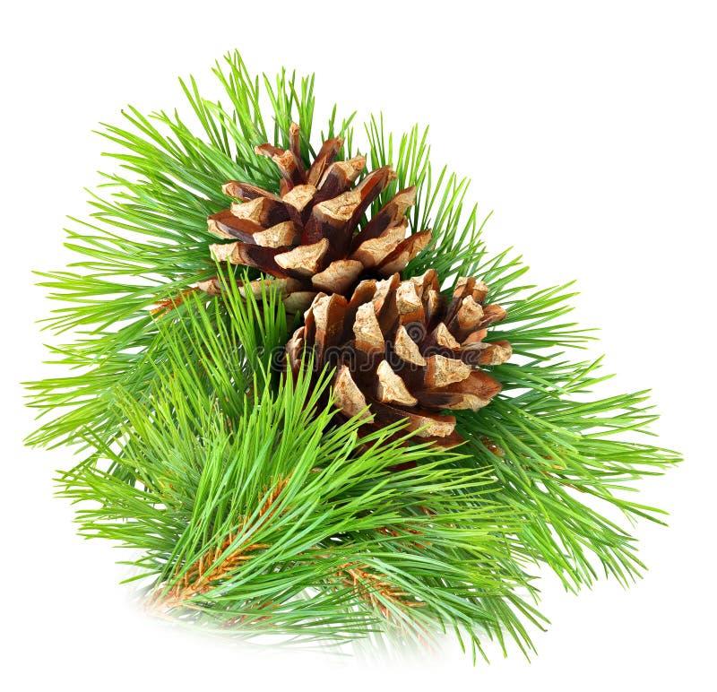 Free Pine Branch Royalty Free Stock Photo - 29624755