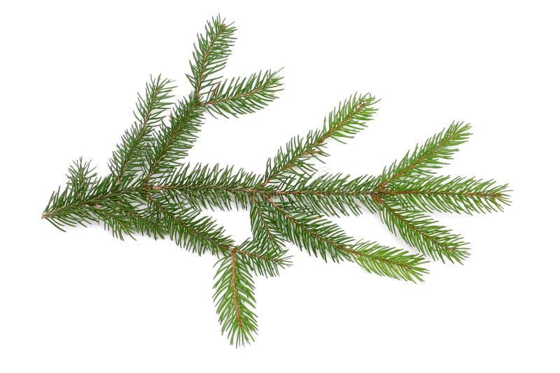 Download Pine Branch Royalty Free Stock Image - Image: 394046