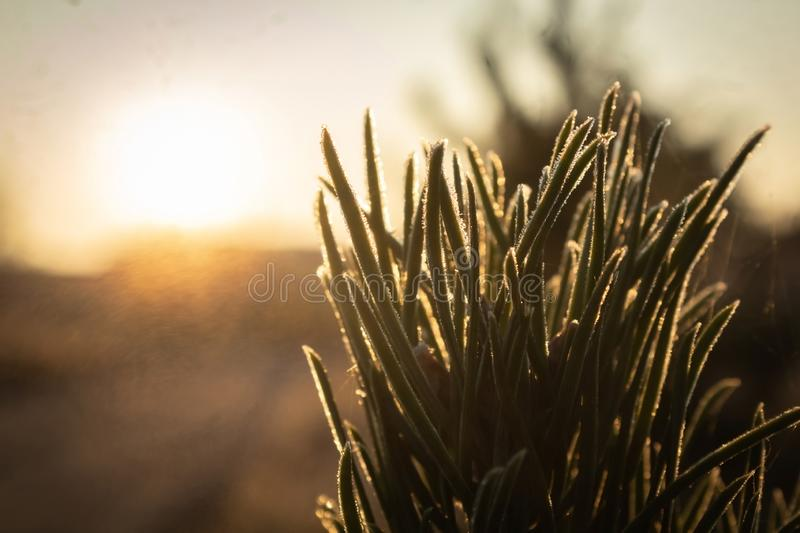Pine branch on bright sun background stock images