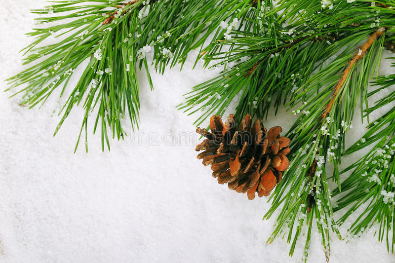 Download Pine branch stock photo. Image of plant, nature, foliage - 35348104