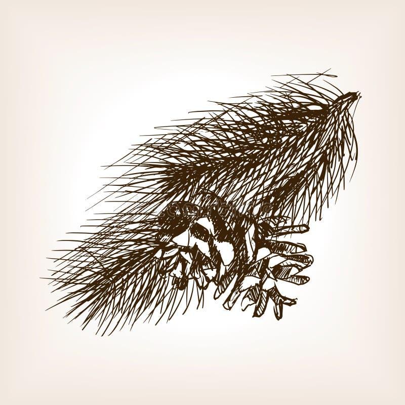 Pine branch sketch style vector illustration. Pine branch and pinecone sketch style vector illustration. Old engraving imitation vector illustration