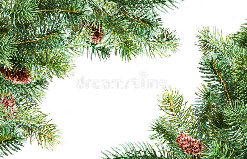 Download Pine branches stock image. Image of concept, environment - 22945333