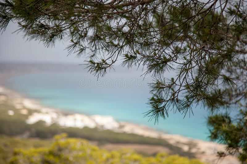 Pine branches in the foreground and a Mediterranean coastal landscape blurred in the background. Pine branches in the foreground and a sunny Mediterranean stock photography
