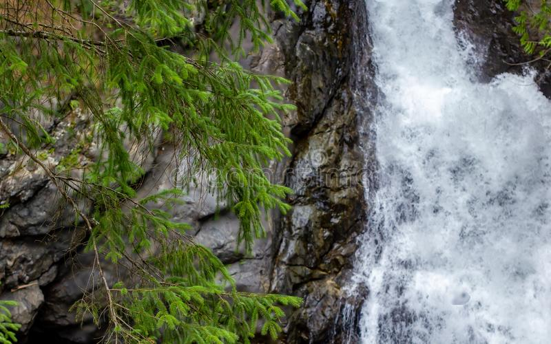 Pine branches in front of waterfall and rock wall. In summer stock image