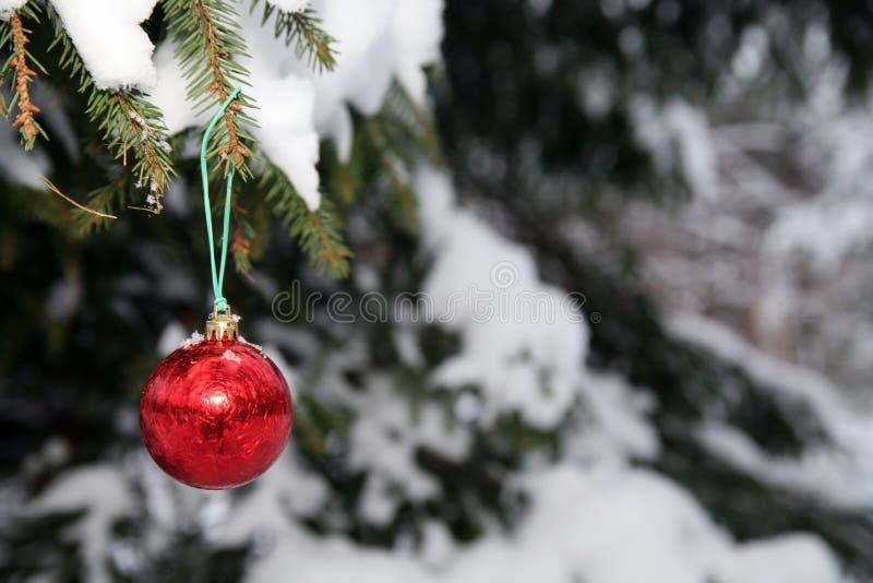 Download Pine and christmas ball stock image. Image of outdoors - 4728073
