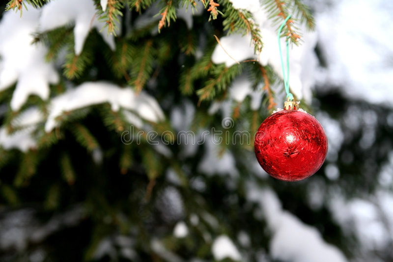 Download Pine And Christmas Ball Royalty Free Stock Photography - Image: 4736197
