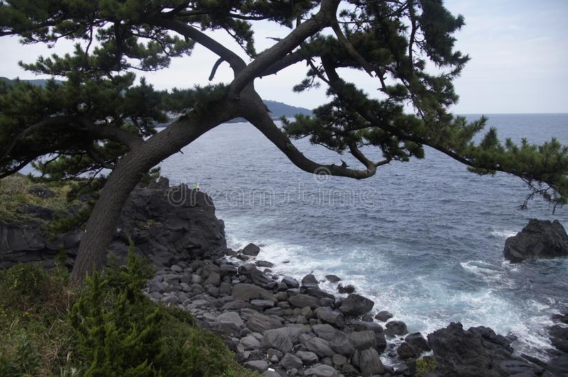 Tree on the shore of the ocean. stock images