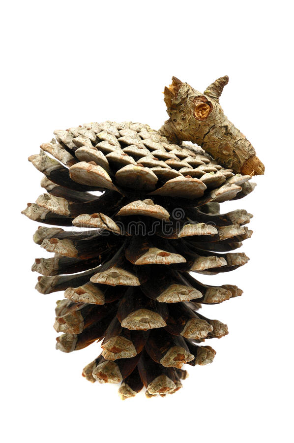 Download Pine Cone Royalty Free Stock Images - Image: 18018279