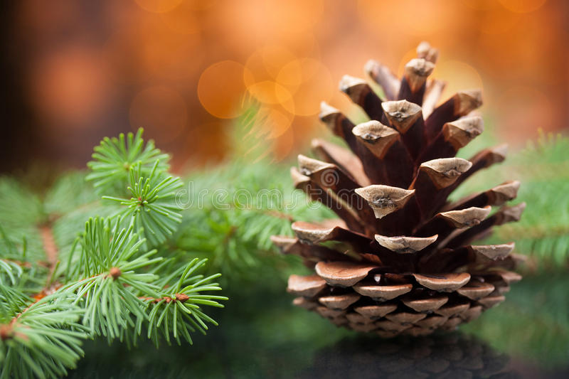 Download Pine cone stock image. Image of design, backdrop, beautiful - 21812727