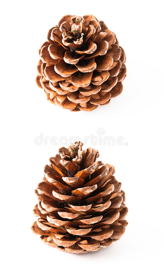 Download Pine cone stock photo. Image of isolate, seasonal, textured - 23516742