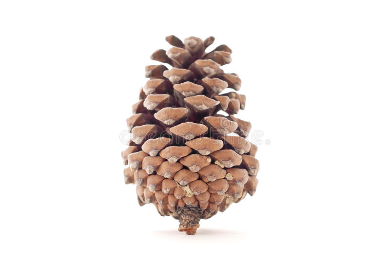 Download Pine Cone stock photo. Image of christmas, xmas, wooden - 24174602