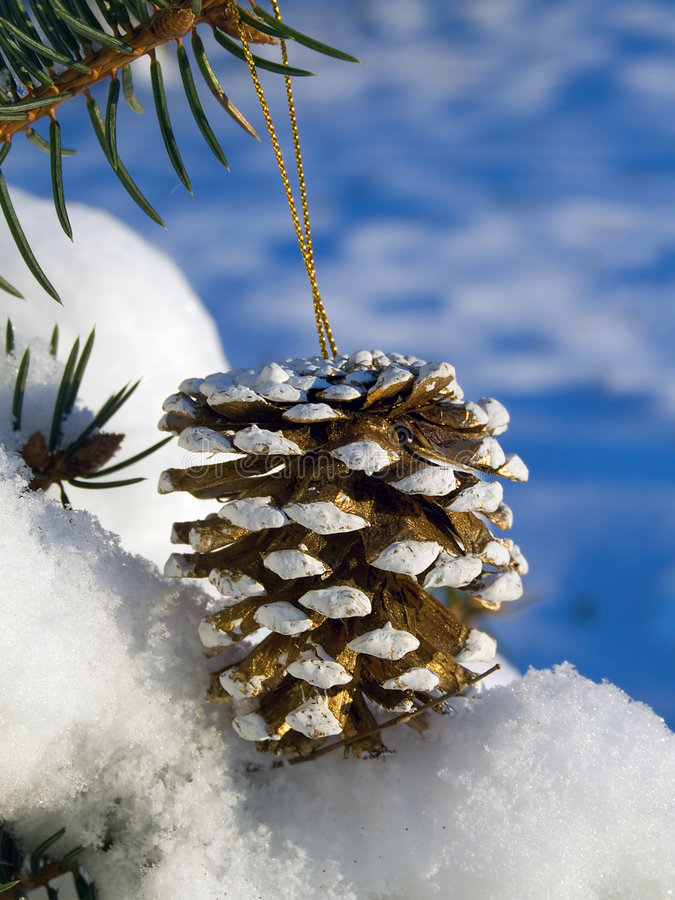 Download Pine cone stock image. Image of decoration, landscape - 3725031