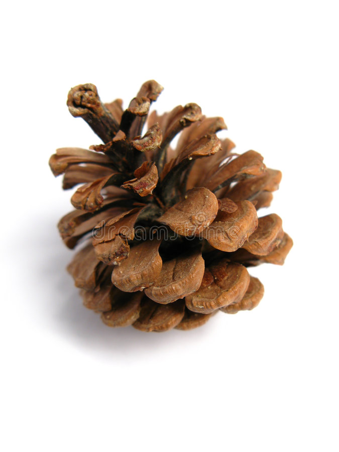 Download Pine Cone stock image. Image of pine, plant, detail, outdoor - 5137597