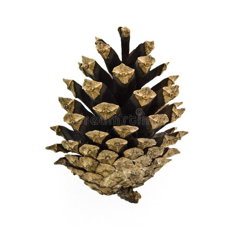Free Pine Cone Royalty Free Stock Image - 6741926